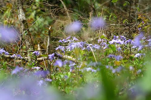 Wildflowers by Ron Jones
