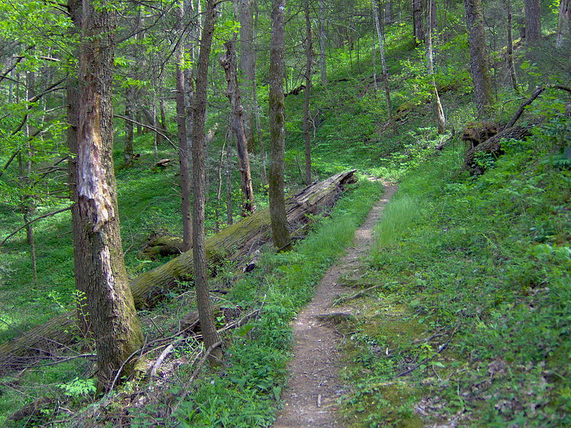 : The Gabes Mountain Trail, crossing a ridgeslope about midway between the trailhead and terminus.