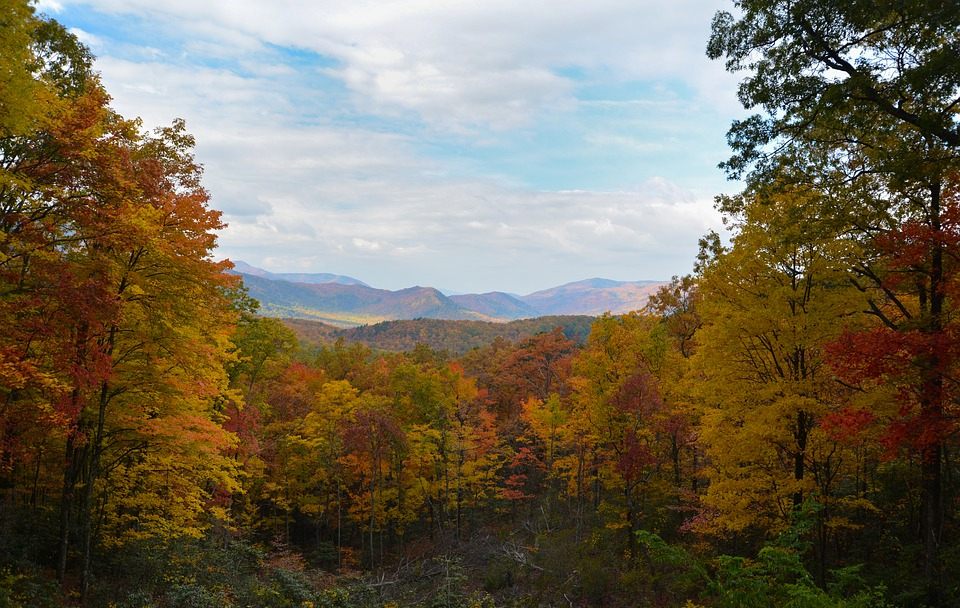 Fall Foliage in the Smokies